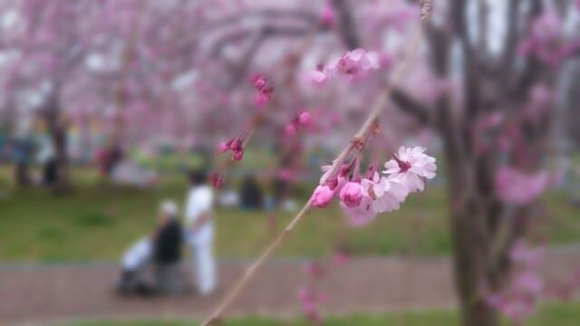 春は看護師求人が増えるが転職はデメリットにも注意